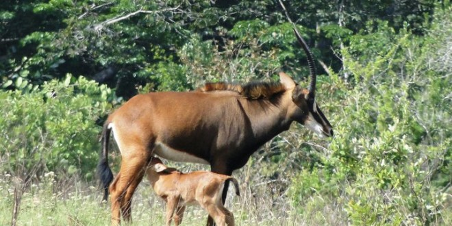Camping Safari at Shimba National Reserve
