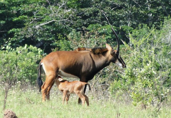 Camping Safari at Shimba National Reserve