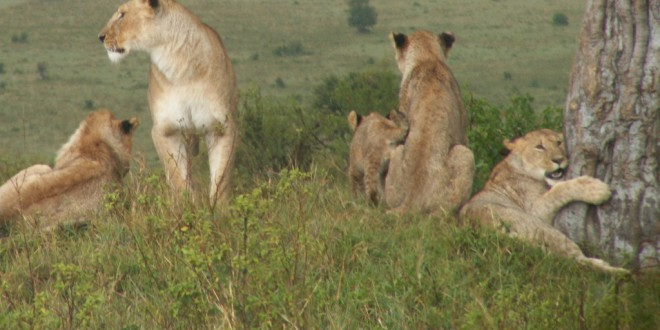 Backpacker Safari to Kenya