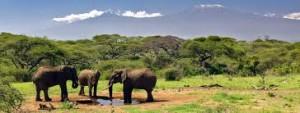 Safari in Kenya elephants at Chyulu Hills