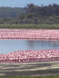 Round Trip Keny -Lake Nakuru