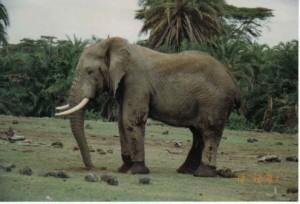 Holiday to Kenya