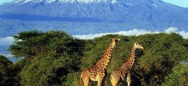 The Best Hiking Camps for Kenya Backpackers
