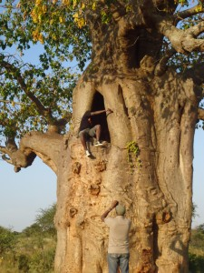 Mutua Matheka up The Snipper Tree