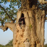 Historic attractions while in the Voyager Ziwani-Tsavo