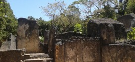 Gedi Ruins-Coastal Kenya Historic Attraction