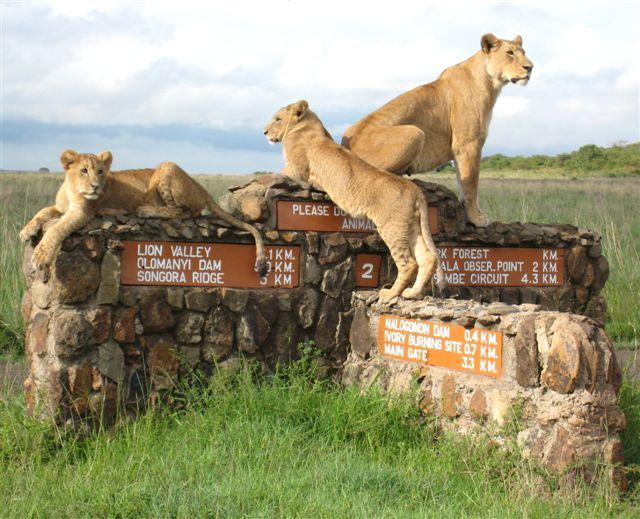 Nairobi park- pic