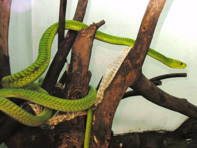 Snake park nairobi