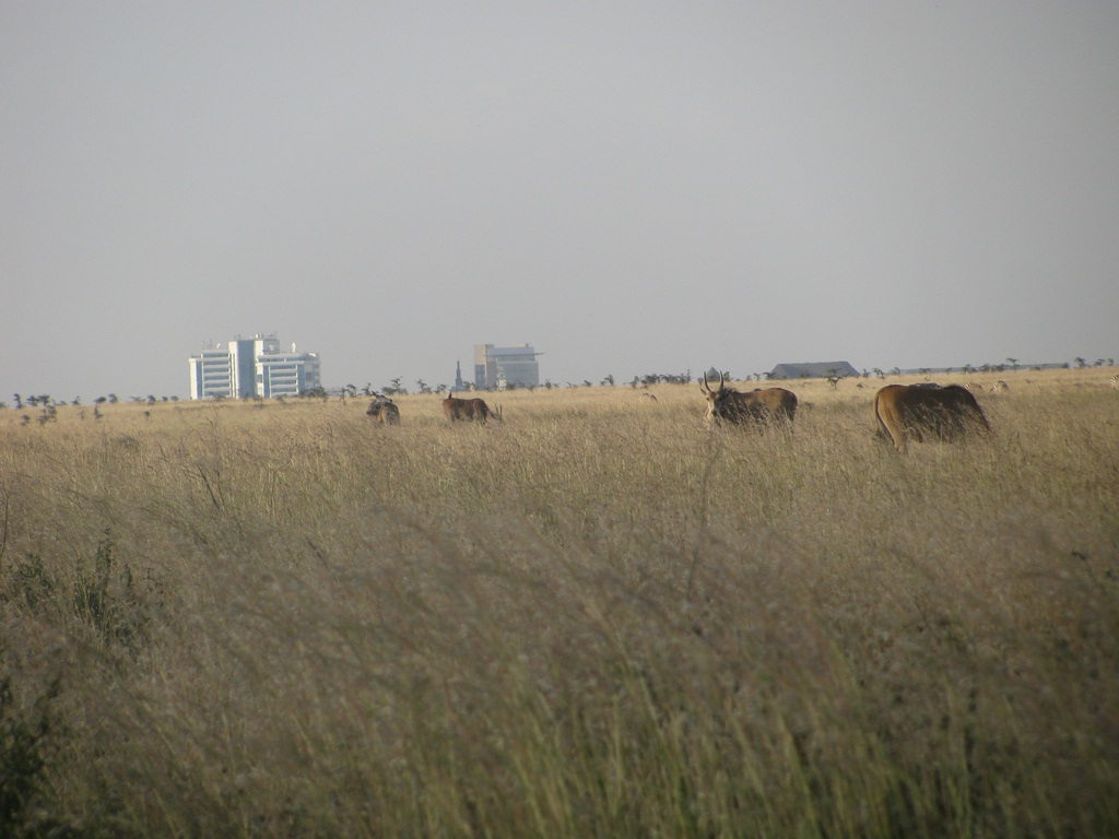 Backdrop of Nairobi from the park