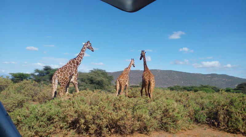 https://kenyatalii.com/2017/11/20/exploring-kenya-alluring-samburu/