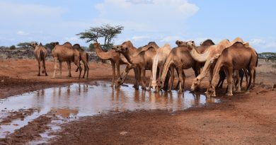 Cultural Tour in Northern Kenya-A Gabra Traditional Wedding Experience